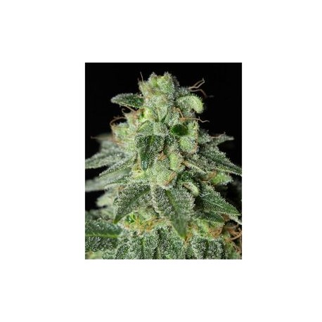Strawberry Amnesia Feminizada
