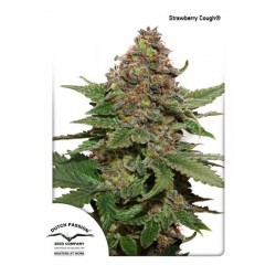 Strawberry Cough Feminizadas