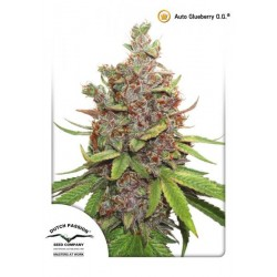 Glueberry OG Autofloreciente