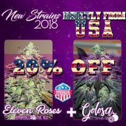 New Strains Pack ( Eleven roses + Golosa )