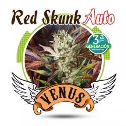 Red Skunk Autofloreciente