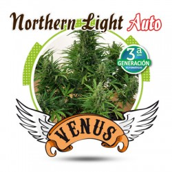 Northern Light Autofloreciente